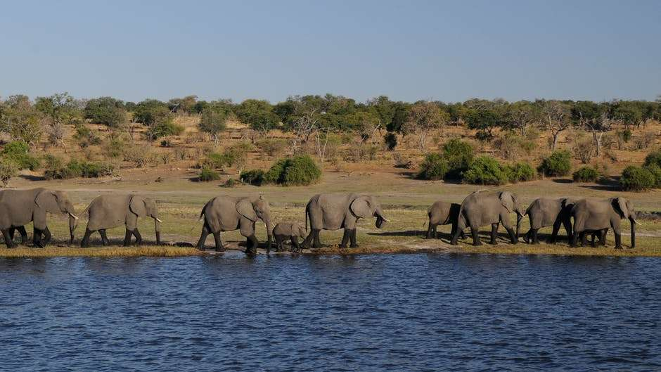 Affordable Places to Go for Spring Break, botswana